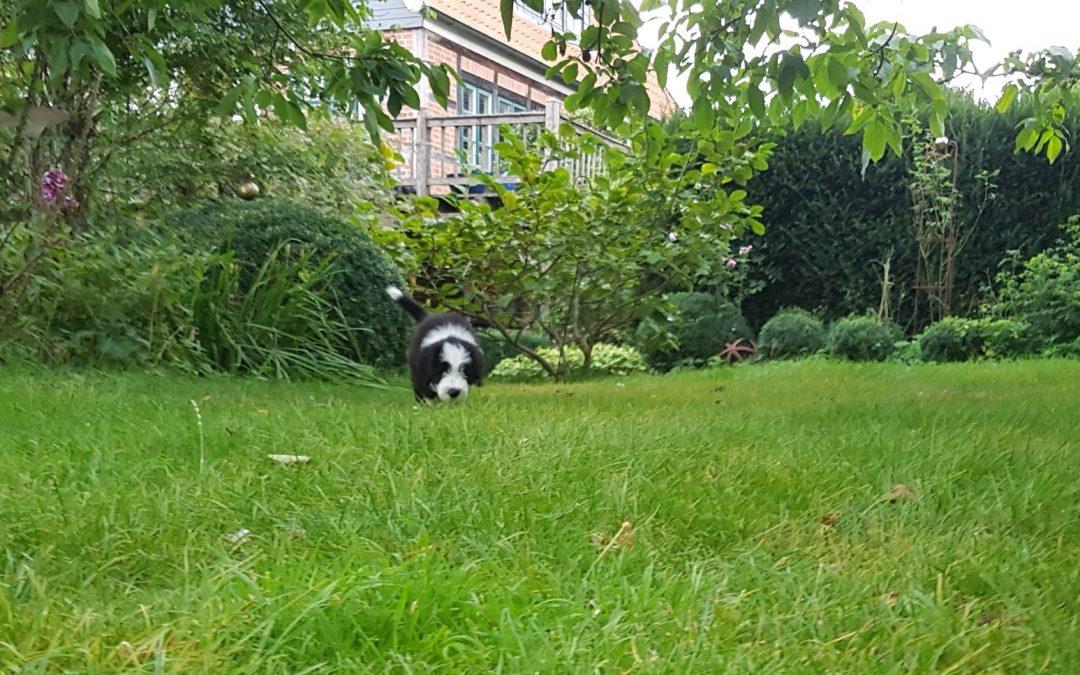 Großer Garten? So what!