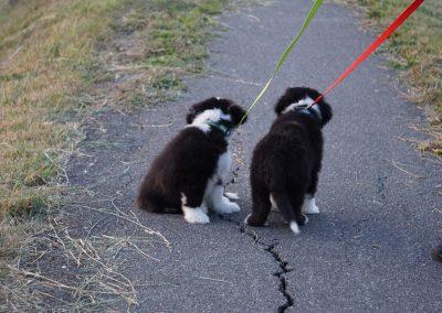 Jasper und Garnet