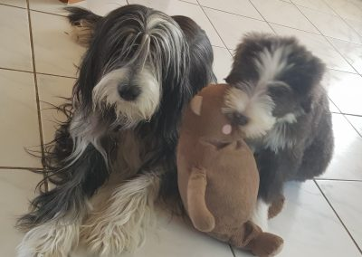Zwei Damen mit Bär!