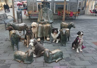 Schulhund-Lehrlinge