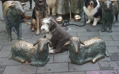 Beim Schulhund-Kurs
