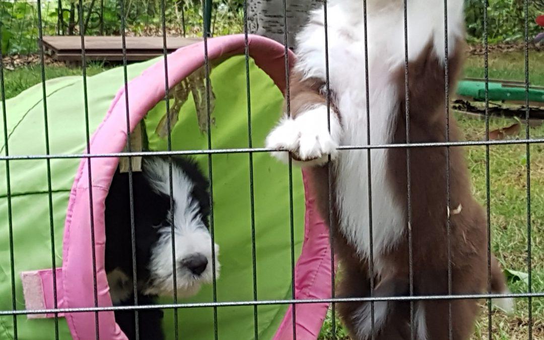 Holt mich hier raus!
